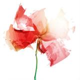 Fototapeta Kwiaty - mak wektor