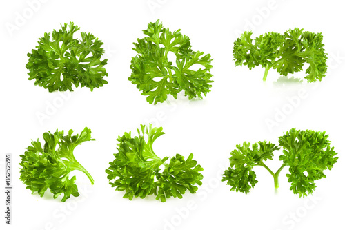 parsley isolated on a white background Canvas Print