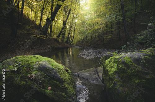 Papiers peints Rivière de la forêt autumn landscape river in forest