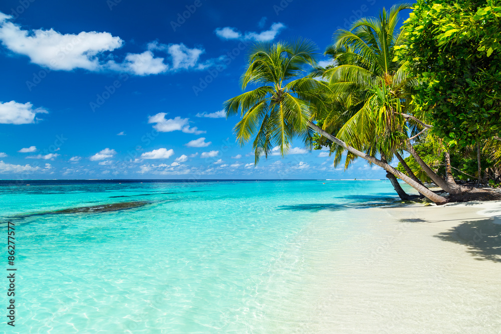 Fototapeta coco palms on tropical paradise beach with turquoise blue water and blue sky