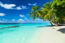 Coco Palms On Tropical Paradis...