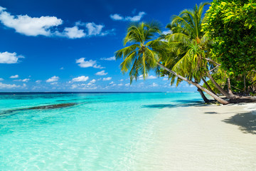 Obraz na Plexicoco palms on tropical paradise beach with turquoise blue water and blue sky