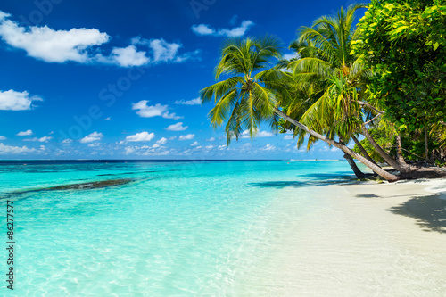 coco palms on tropical paradise beach with turquoise blue water and blue sky Poster