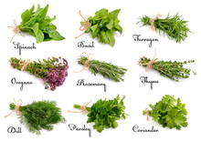 Collection Of Cooking Herbs An...