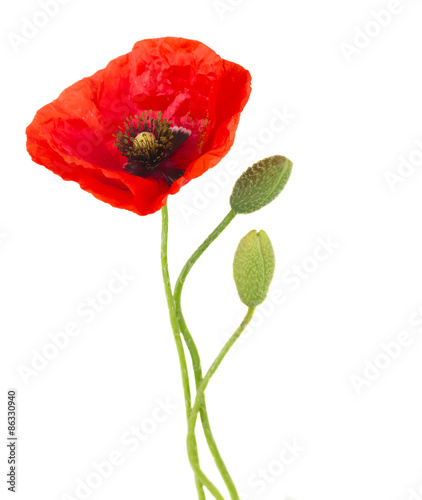 Foto op Canvas Klaprozen Poppy flowers
