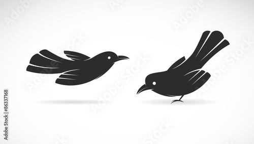 Photo Vector image of an bird on white background