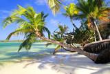 Fototapeta Krajobraz - Tropical palms