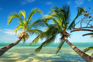 Obraz na SzkleBeautiful palms on tropical beach