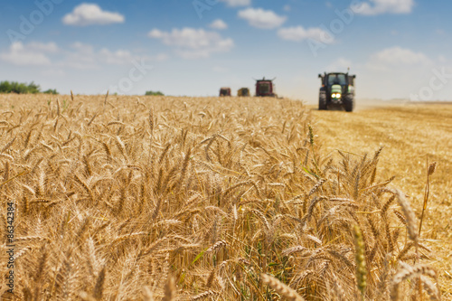 Fotografia  Combine harvester harvesting wheat .