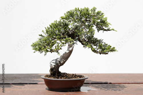 Papiers peints Bonsai Juniperus sabina bonsai on a wooden table