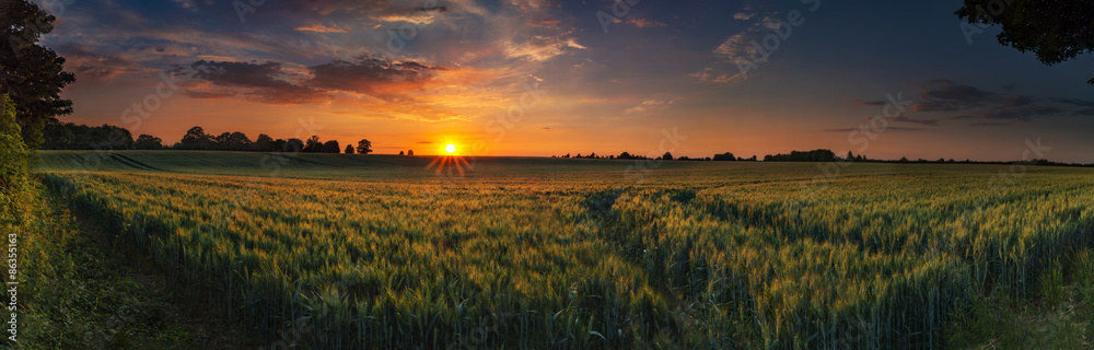 Fototapety, obrazy: Panoramic sunset over a ripening wheat field