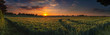 canvas print picture - Panoramic sunset over a ripening wheat field