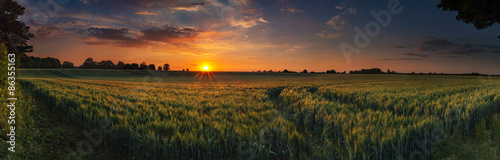 Foto  Panoramic sunset over a ripening wheat field