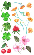 Flowers Clover Cherry Berry Buttercup Set Vector Clip Art Isolated