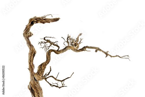 Leinwand Poster Dry branch