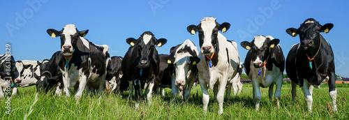 Foto op Plexiglas Koe Breite Front einer Kuhherde vor landwirtschaftlichen Gebäuden
