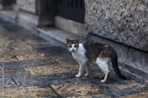Photo  wild cat walking on the street