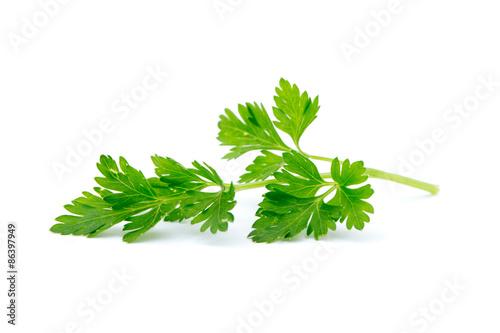 Fotografía  parsley