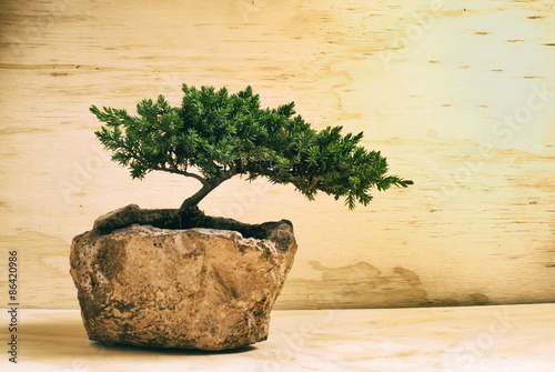 Deurstickers Bonsai Bonsai tree
