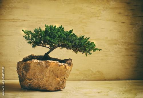 In de dag Bonsai Bonsai tree
