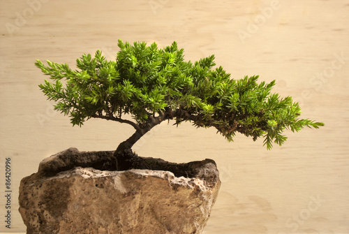 Spoed Foto op Canvas Bonsai Bonsai tree