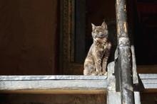 Yellow Eyed Cat. Tsuklakhang Temple-Gyantse-Tibet. 1640