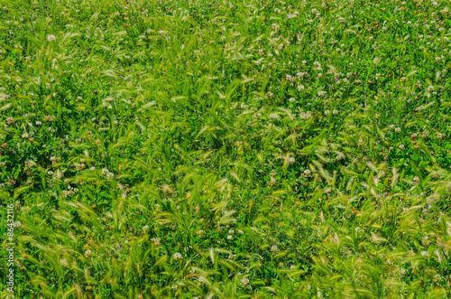Natural green background Canvas Print
