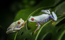 Tropical Frogs Background