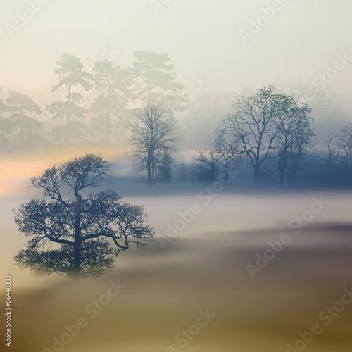 Fototapety, obrazy: Beautiful landscape