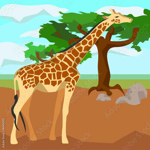 Photo  Giraffe on background trees, animals and nature