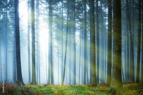 Photo sur Toile Bestsellers Sun shining through fog in the forest