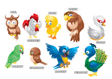 A Set Of Poultry