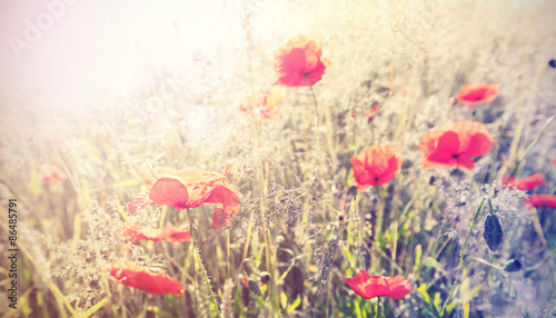 Vintage retro style poppy flowers background, shallow depth of f - 86485791