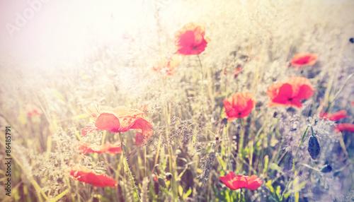 Vintage retro style poppy flowers background, shallow depth of f - 86485791