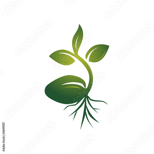 Fotografie, Obraz  Realistic Sprout Seed Grow Vector Illustration