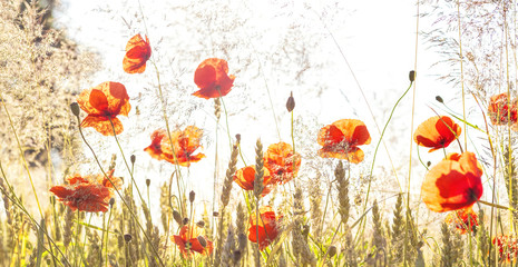Fototapeta Do salonu Panoramic retro view of sunrise over meadow.