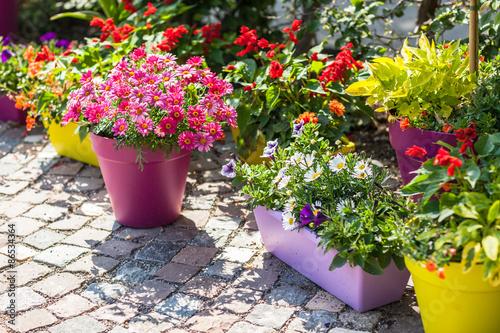 Cuadros en Lienzo Flower pots