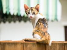 Skinny Cat Sit On A Brick Wall.