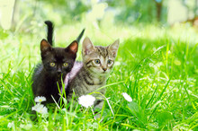 Small Gray Kitten On The Grass...