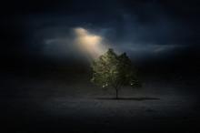 Light Beams On A Tree