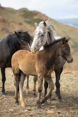 herd of horses with young foals