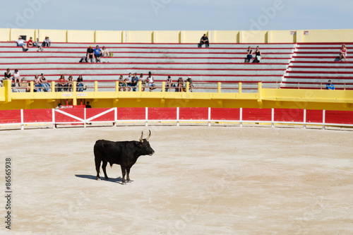 Foto op Canvas Stierenvechten Stierkampf
