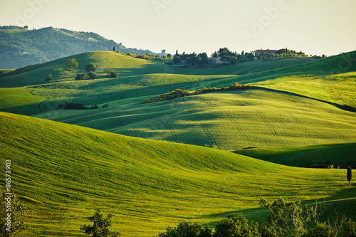 Canvas Prints Honey Tuscany hills