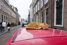 Cat On A Red Car Roof In Utrec...