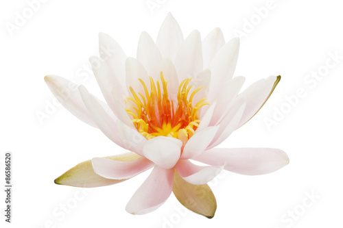 Deurstickers Waterlelies Waterlily isolated on white