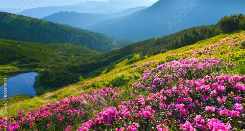 Fototapeta łąka alpejska-laka