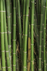 green bamboo fence background