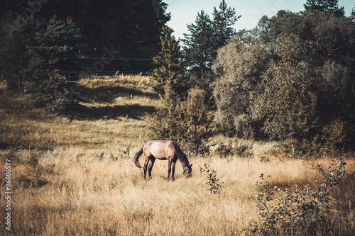Beautiful horse on meadow
