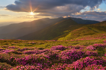 Mountain flowers on slope