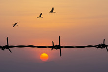 Silhouette Of Barbed Wire And Birds